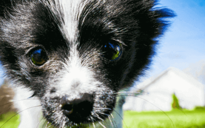 This Magical Dog Only Answers To Harry Potter Spells. 10 Points to Gryffindog!